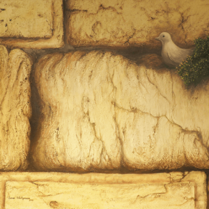 יונה בין אבני הכותל 80/110 The dove between the Western Wall stones
